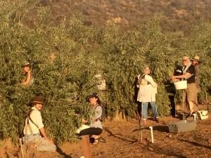 1.group harvesting2