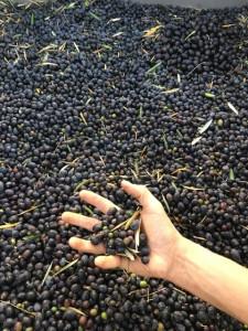 1.hand holding olives