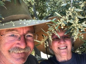 Steve & Robbie under a flowering olive tree